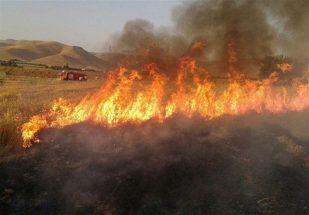 ۶ هکتار از مزارع کشت گندم موسیان طعمه حریق شد