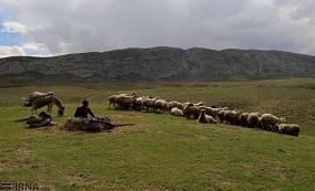 """عشایر ایلام سالانه بیش از ۲۵ هزار تن """"شیر"""" تولید می کنند"""