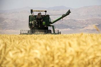 میزان تولید گندم در استان ایلام ۲ الی ۳ برابر نیاز است