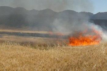 فرمانده انتظامی شهرستان ایوان: ۱۰ هکتار از مزارع کشاورزان ایوانی در آتش سوخت