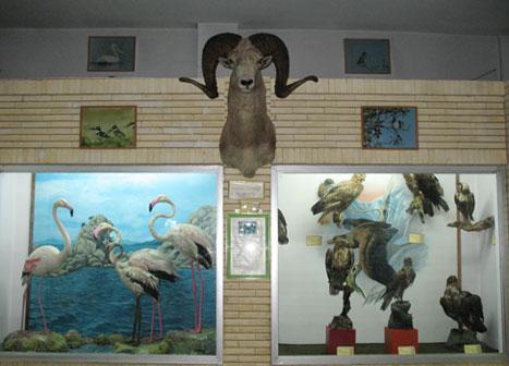 مدیرکل محیط زیست استان ایلام: بازدید از موزه تاریخ طبیعی ایلام در ایام نوروز رایگان شد