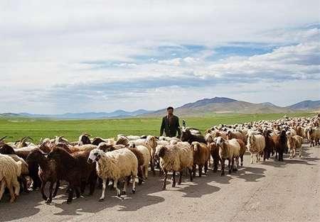 مدیر کل امور عشایر ایلام خبر داد: خسارت 10  میلیارد ریالی سیل به راه های عشایری استان